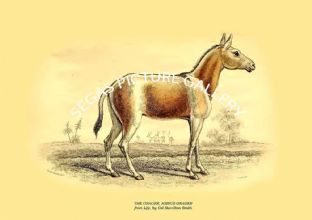 THE ONAGER, ASINUS ONAGER